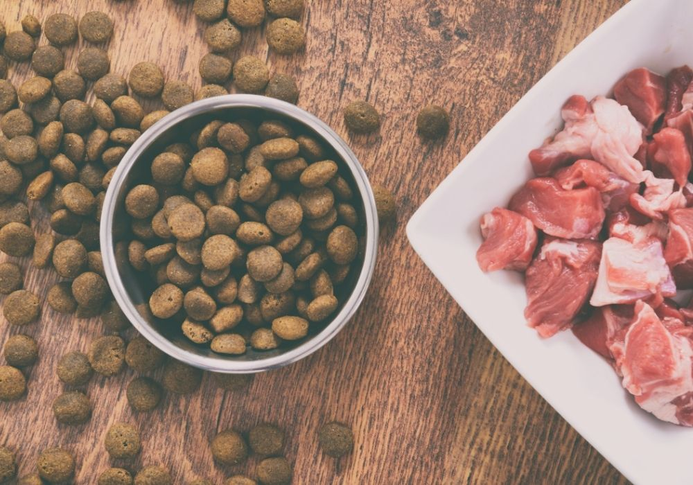 Choosing the right diet for your dog