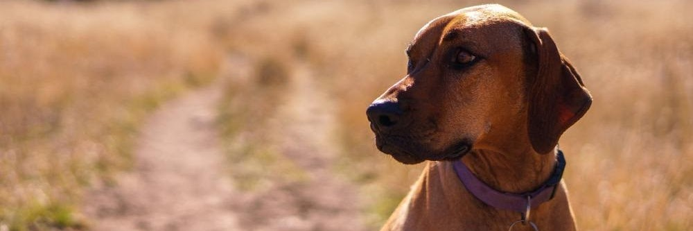 emotional support animal in Arizona