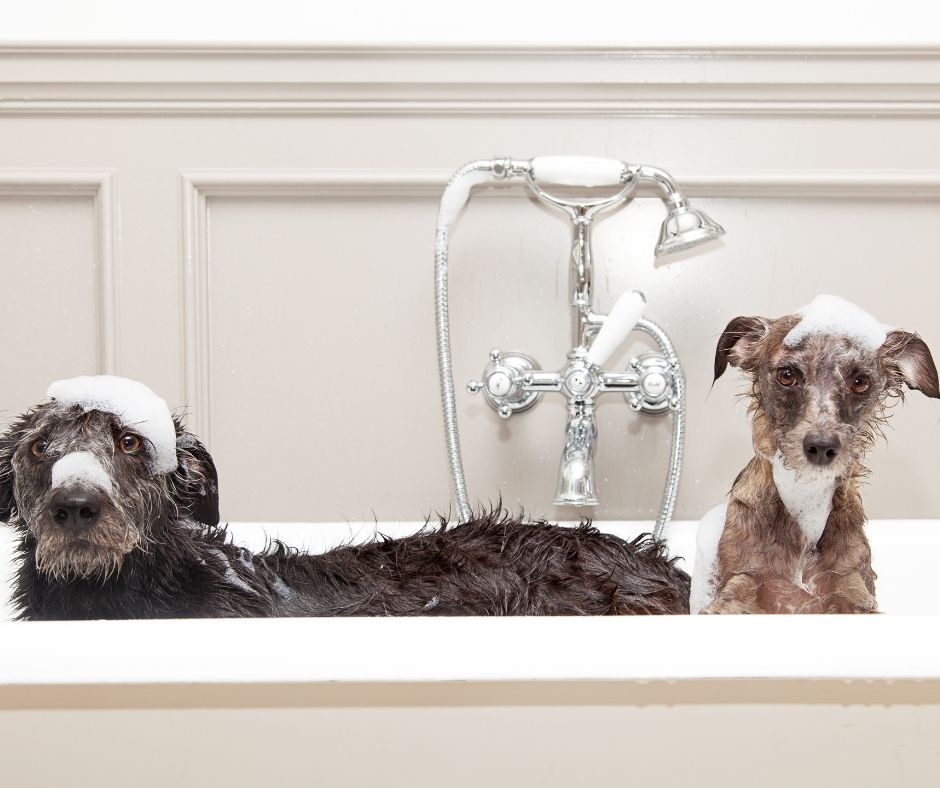Dog Care - Dogs in the Bath