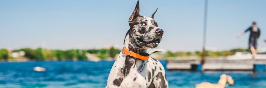 The Benefits of an Emotional Support Animal in Florida