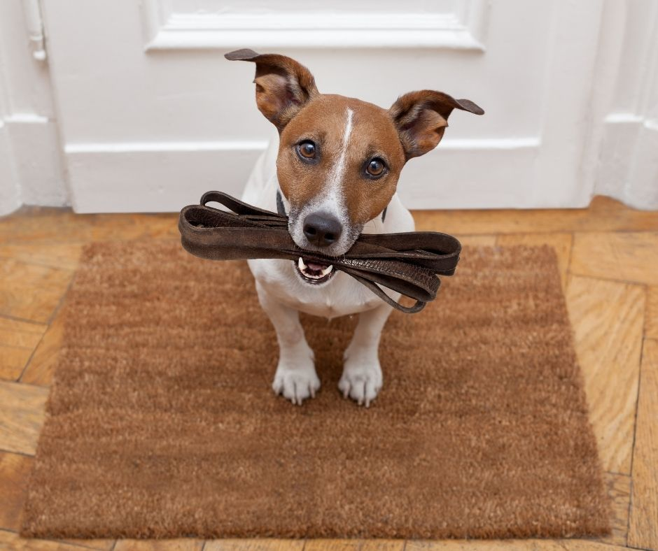 Things to Know Before Getting a Dog - Exercise Needs