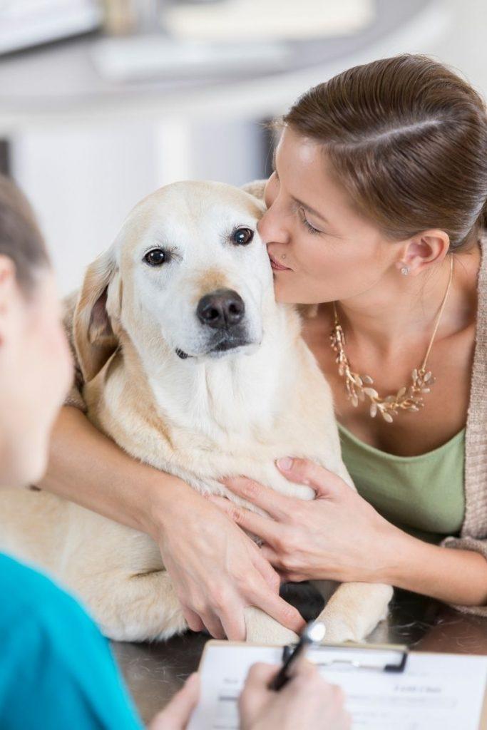 Legitimate Emotional Support Animal