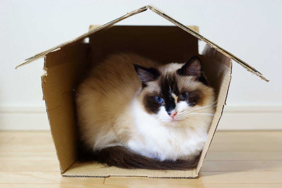 Cat in Box House