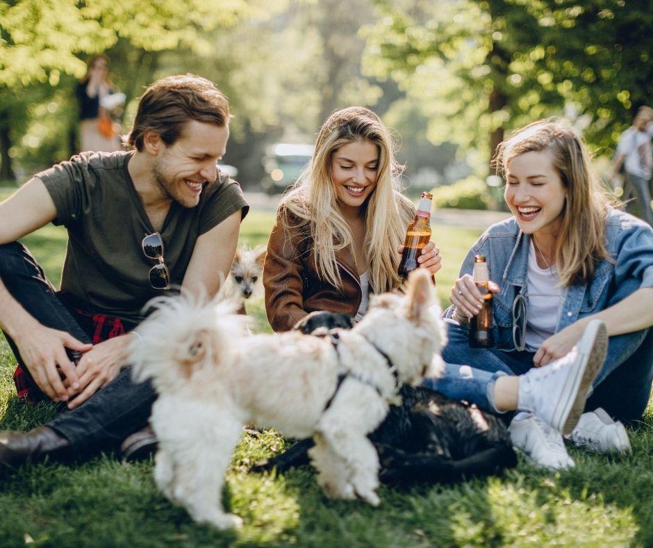 Dog Socializing with People