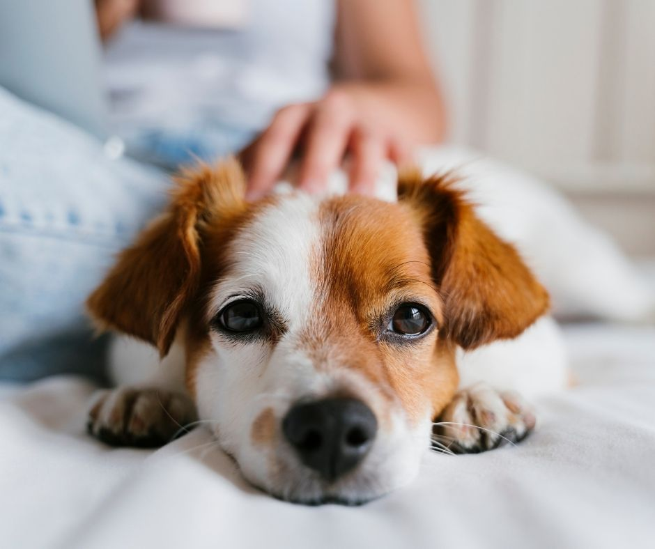 Things to Know Before Getting a Dog