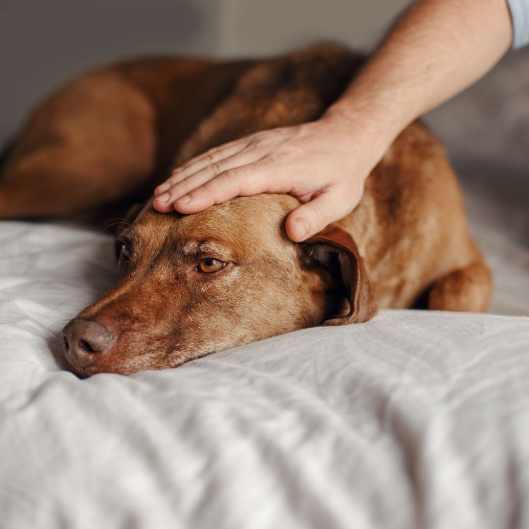 How to Cope with the Loss of a Pet