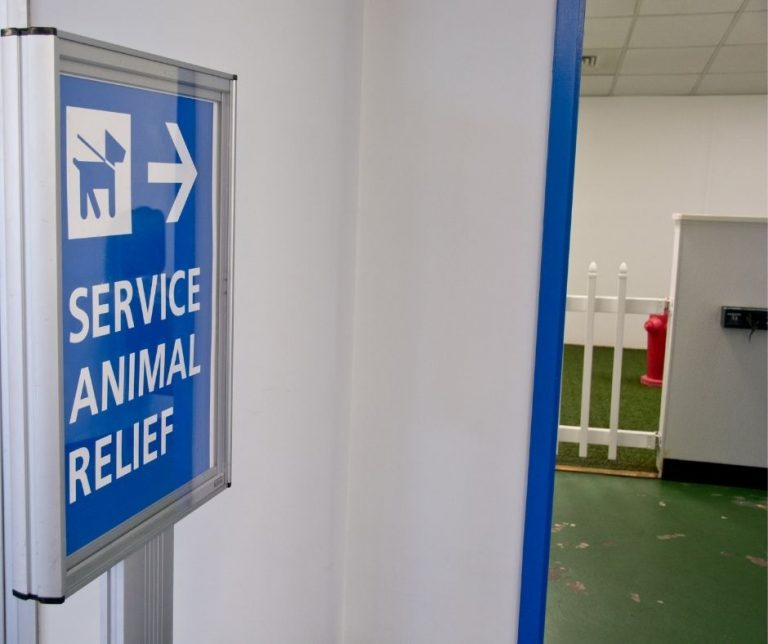 Flying with Service Animals
