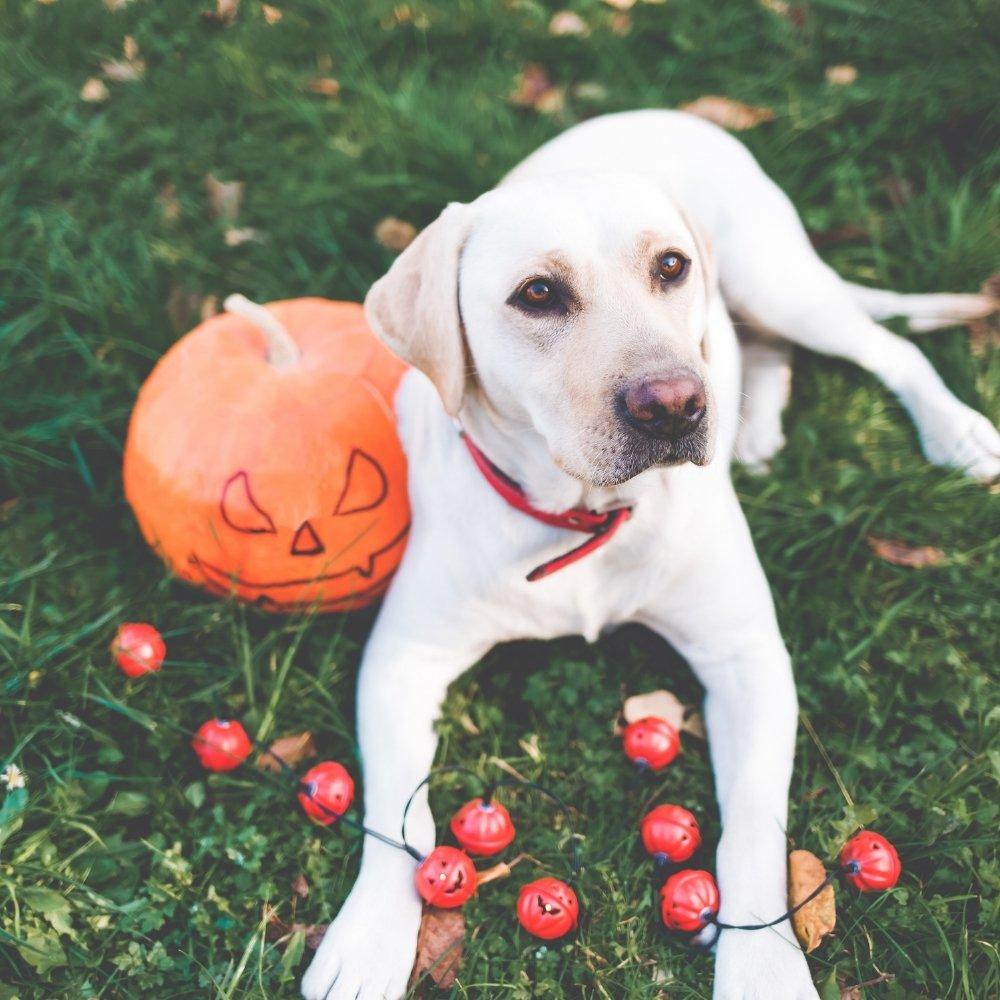 9 DIY Healthy Fall Treats for Dogs