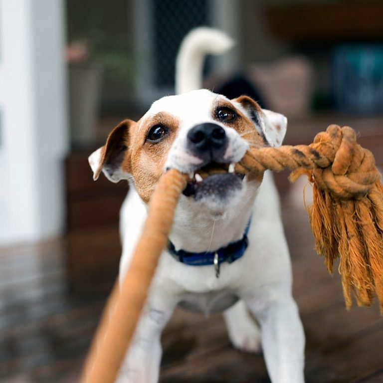 Best Small Dog Breeds for Apartment Living