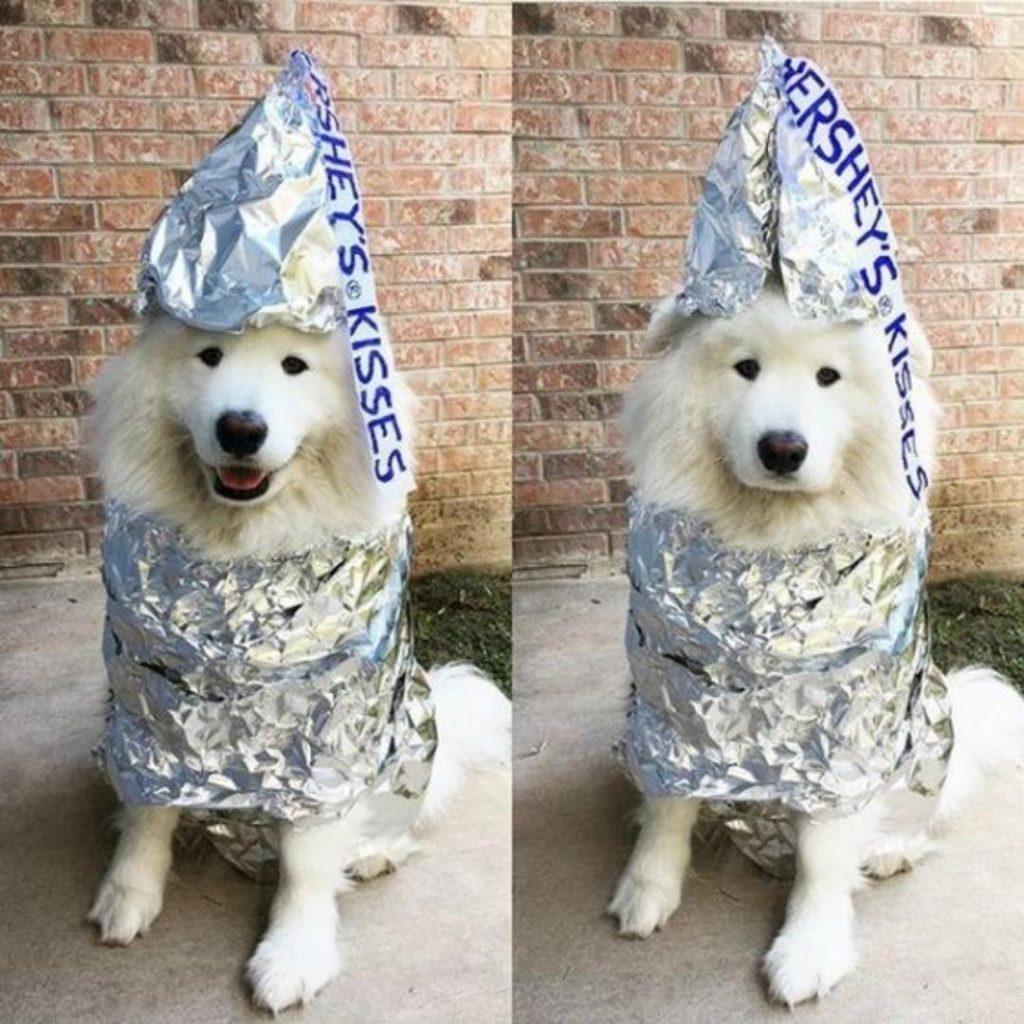12 Easy DIY Dog Halloween Costumes