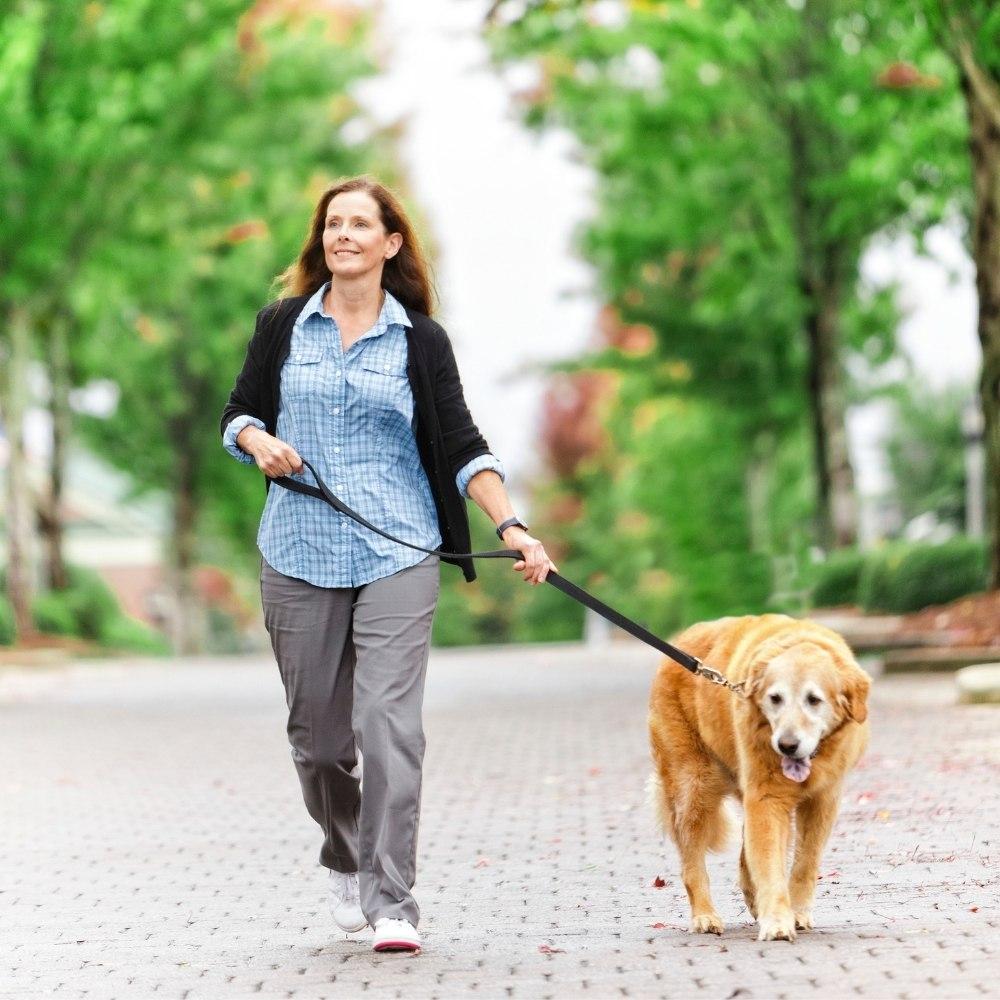 Pet Adoption and Fostering Increase During Coronavirus Pandemic