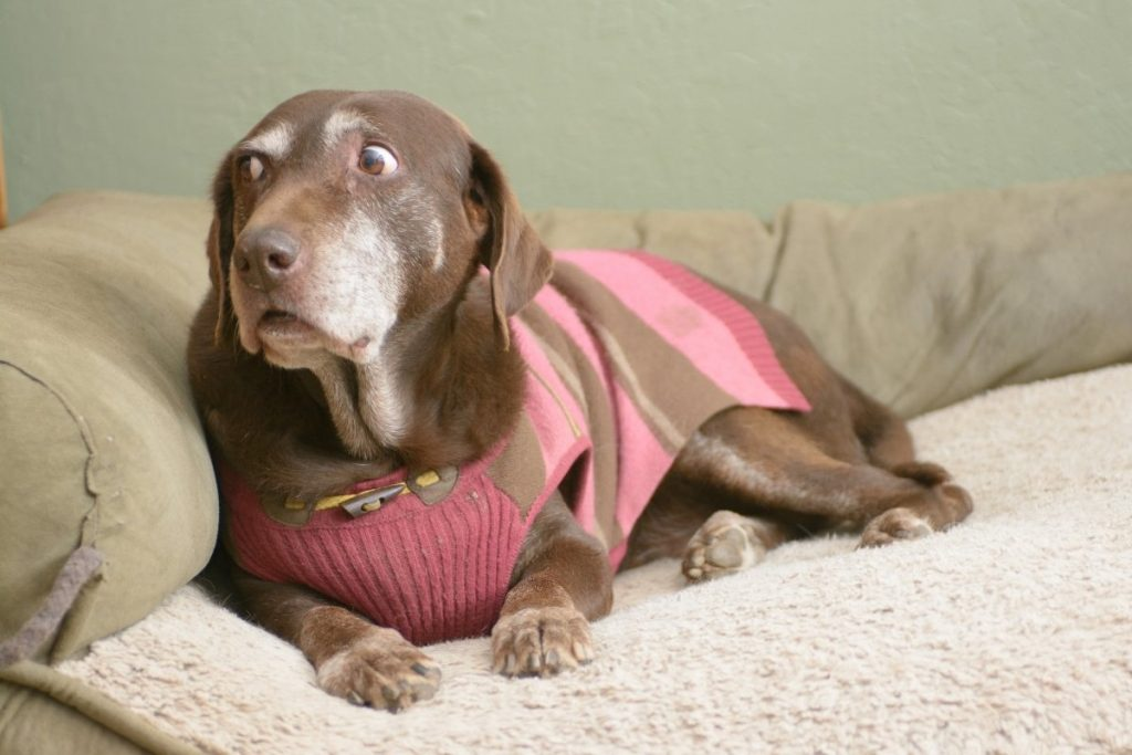 5 Ways to Prevent Separation Anxiety in Dogs