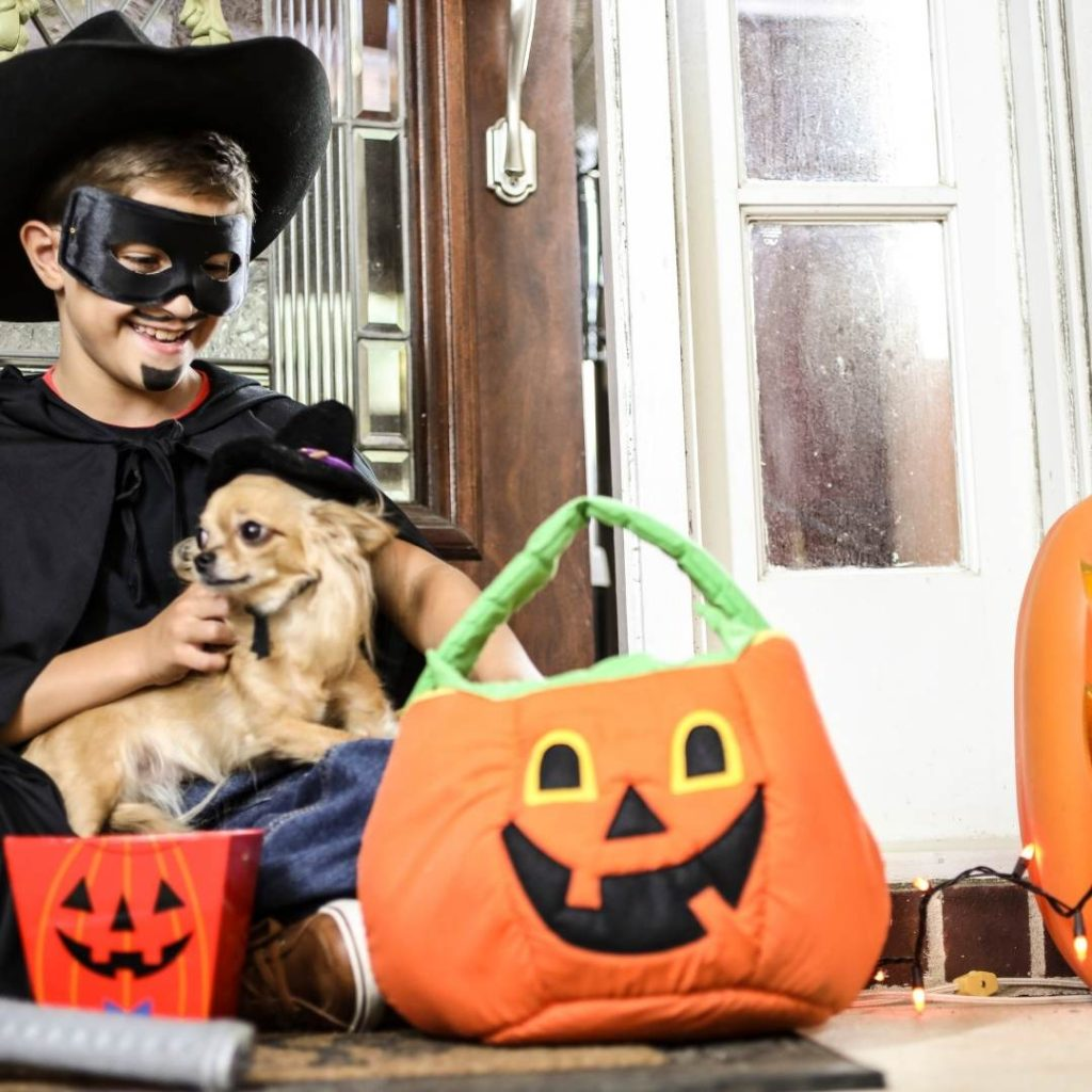 7 Tips to Keep Your Pet Safe on Halloween