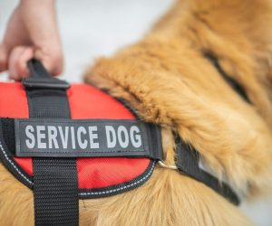 All You Need to Know About Psychiatric Service Dogs